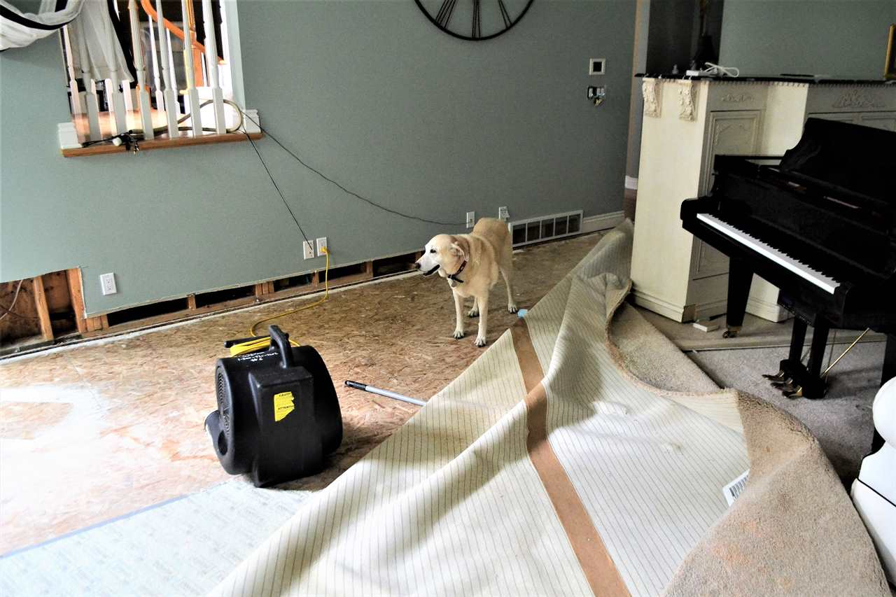 Top 14 Tips For Water Damage Repair And Restoration