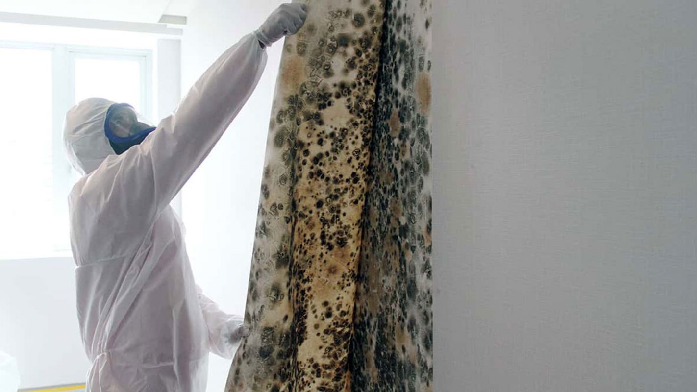 Mold Removal Services Decatur GA