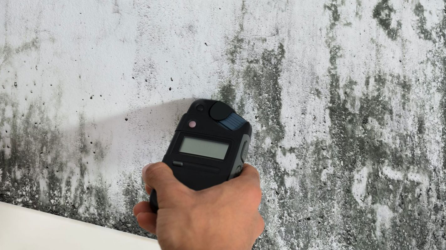 Mold Inspection Services Roswell GA